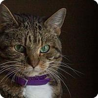 Adopt A Pet :: Casanova - Cincinnati, OH