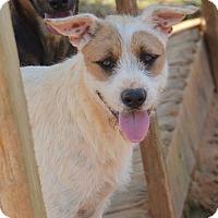 Adopt A Pet :: Larry - Charlemont, MA