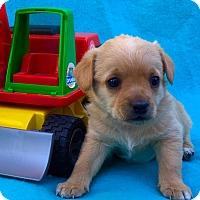 Adopt A Pet :: Tonka - Irvine, CA