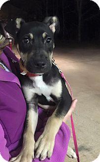 Dog Adoption in NJ