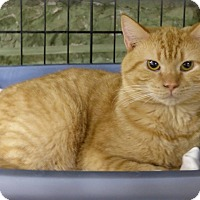 Adopt A Pet :: Scout - Marlinton, WV