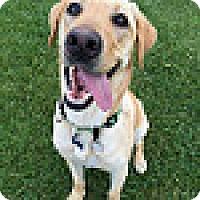 Adopt A Pet :: Marley #7 - Purcellville, VA