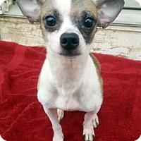 Adopt A Pet :: Fieval - Bloomington, IL