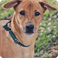 Adopt A Pet :: Scrappy aka Taz - Loxahatchee, FL