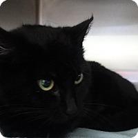 Adopt A Pet :: Adelaide - Elyria, OH