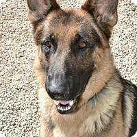 Adopt A Pet :: Winston - Meridian, ID
