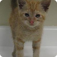 Adopt A Pet :: Cori - Gary, IN
