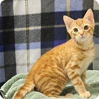 Adopt A Pet :: Samson - Seminole, FL