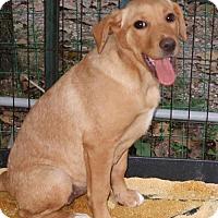 Adopt A Pet :: Tillie - Albany, NY