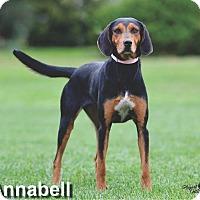 Adopt A Pet :: Annabell - Ottumwa, IA