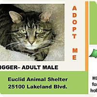 Adopt A Pet :: Tigger - Euclid, OH