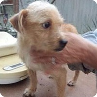 Terrier (Unknown Type, Medium) Mix Dog for adoption in Rockville, Maryland - Buddy