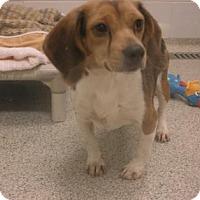 Adopt A Pet :: SARAH - Gloucester, VA