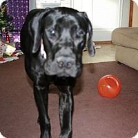 Adopt A Pet :: Jessie - Springfield, IL
