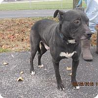 Adopt A Pet :: Buster - Richfield, WI
