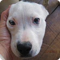 Adopt A Pet :: EMMETT - Rutherfordton, NC