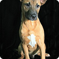 Adopt A Pet :: Pico - Lufkin, TX