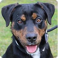 Adopt A Pet :: RUFUS - Red Bluff, CA