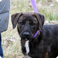 Adopt A Pet :: Danielle - Liberty Center, OH