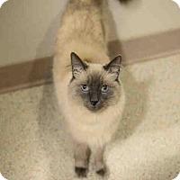 Adopt A Pet :: GABRIEL - Murray, UT