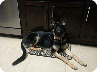 German Shepherd Dog Dog for adoption in Nashville, Tennessee - Sparkles