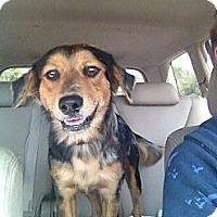 Adopt A Pet :: Havana - Sarasota, FL