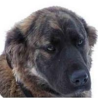 Adopt A Pet :: Dora - Rigaud, QC