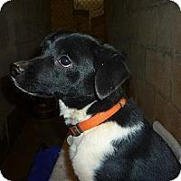 Adopt A Pet :: Buster - Linden, TN