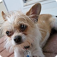 Adopt A Pet :: TAZ - AUSTIN, TX
