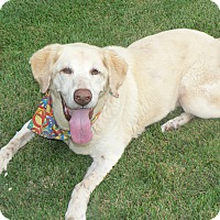 Adopt A Pet :: Koda- reduced fee - Nashville, TN