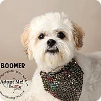 Adopt A Pet :: Boomer - Omaha, NE
