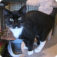 Adopt A Pet :: Checkers - Berkeley Hts, NJ