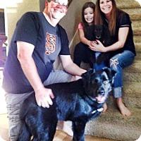 Adopt A Pet :: Oberon - Sacramento, CA