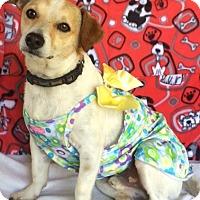 Adopt A Pet :: Jack Jack - Kilgore, TX