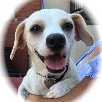 Adopt A Pet :: Betty - Anaheim, CA