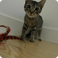 Adopt A Pet :: Ule - Milwaukee, WI
