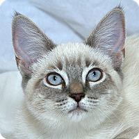 Adopt A Pet :: Carmel M - Sacramento, CA