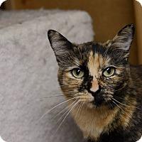 Adopt A Pet :: Jazzy - Eureka, CA