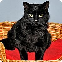 Adopt A Pet :: Clara - Gatineau, QC