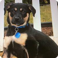 Adopt A Pet :: LINDSAY VON LANDRA - Los Angeles, CA