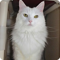 Adopt A Pet :: DAISY - Long Beach, CA