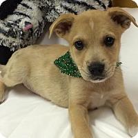 Adopt A Pet :: Zoe - Fort Pierce, FL