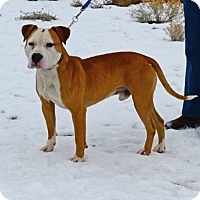 Adopt A Pet :: Sherman - Gardnerville, NV