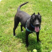 Adopt A Pet :: 1605-1573 Yoda - Virginia Beach, VA