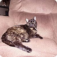 Adopt A Pet :: Tessie - Evans, WV