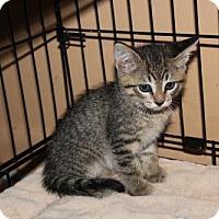 Adopt A Pet :: Frannie H - Melbourne, FL