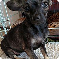 Adopt A Pet :: CandyGram - San Diego, CA
