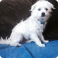 Adopt A Pet :: Harrington - San Francisco, CA