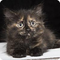 Adopt A Pet :: Gourdie - Nashville, TN