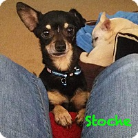 Adopt A Pet :: Stoche - Gulfport, MS